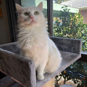 No photo for Phoebe (Located In Upwey)