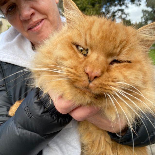 Photo of Garfield /Mustard