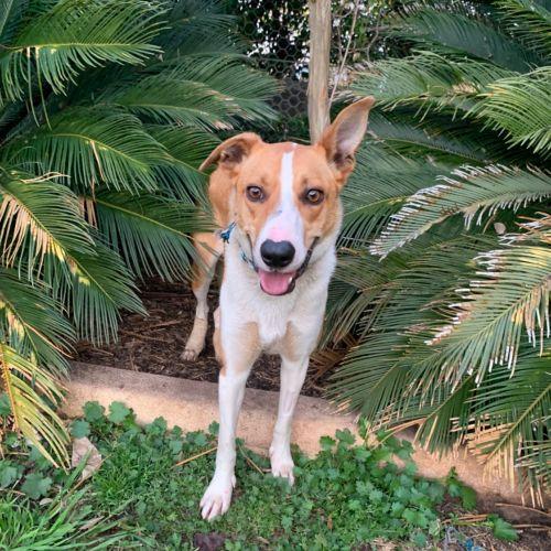 Annie - Collie Dog
