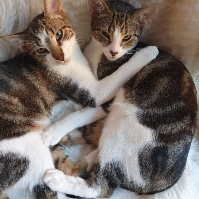 Photo of Liddy And Spot