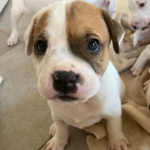 Desperate For Love Dog Pound Rescue Petrescue