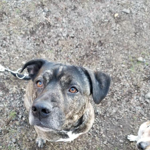 Photo of Bobbie ~ The Loyal Companion