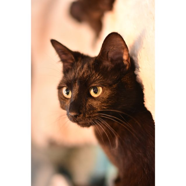 Photo of Michelle **2nd Chance Cat Rescue**