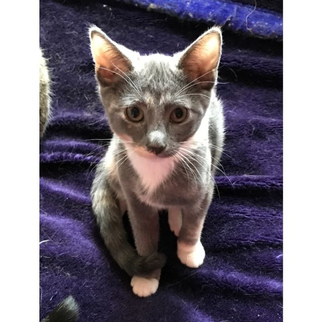 Photo of Twiggy  Blue Puss In Boots