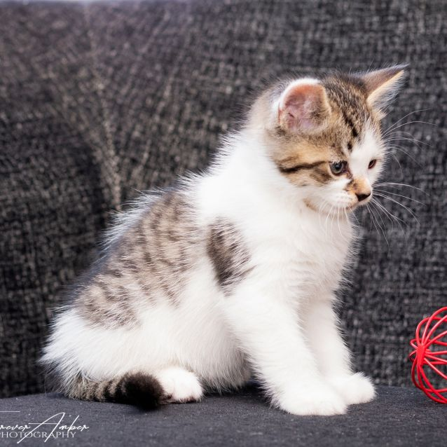 Photo of Zuko **2nd Chance Cat Rescue**