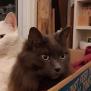 Photo of Sammy & Charlie