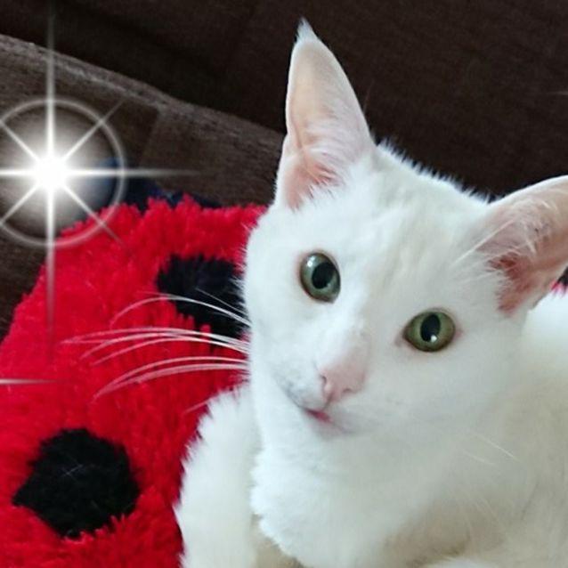 Photo of Yuki