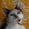 Photo of Krystal