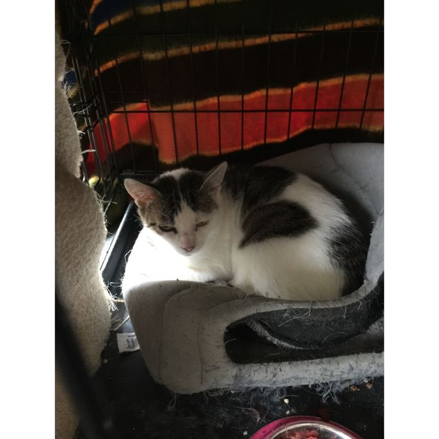 Photo of Jacinta*Foster To Adopt* (Located In Diggers Rest)