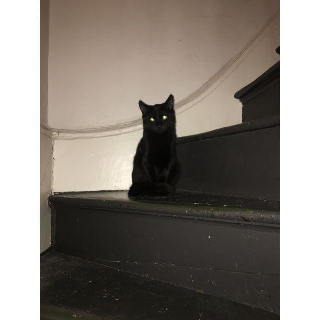 Photo of Boo   Located In Preston