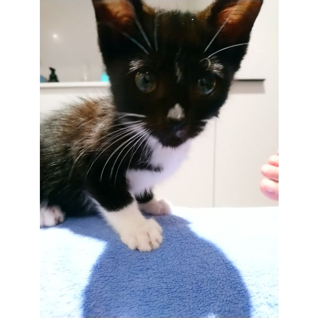 Photo of Penelope   Meet Me Sunday @Neko Hq, Preston