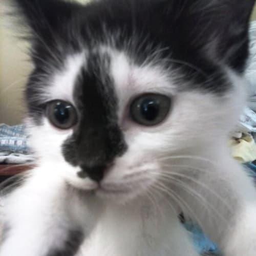 6 kittens male & female