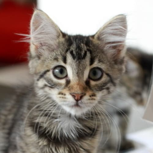 Pound Cats | Milly, Molly + Mandy