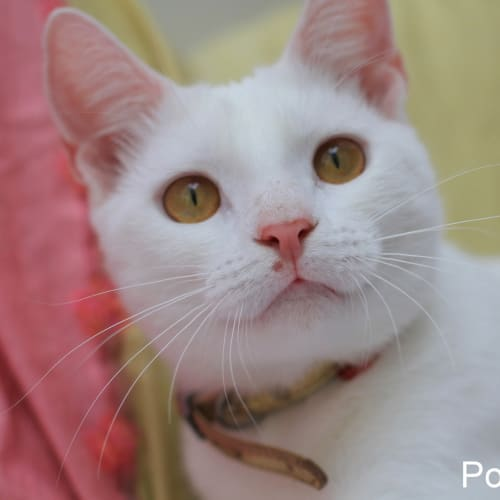 Pound Cats | Shiro + Basil | pending adoption
