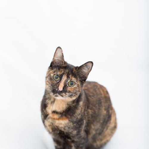 Pound Cats | Juliette