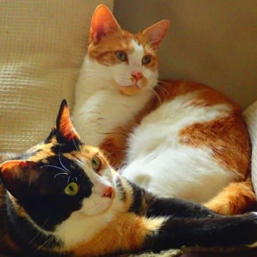 Pound Cats | Jumanji