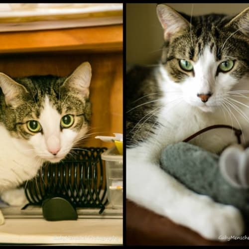 Bailey and Timmy - Domestic Cat