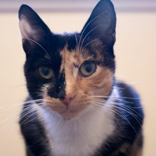 Callie - N.O.W $80 To Adopt