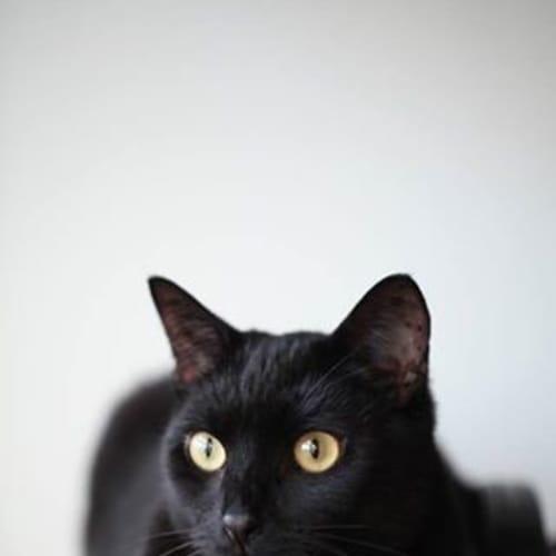 Pound Cats | Lenny