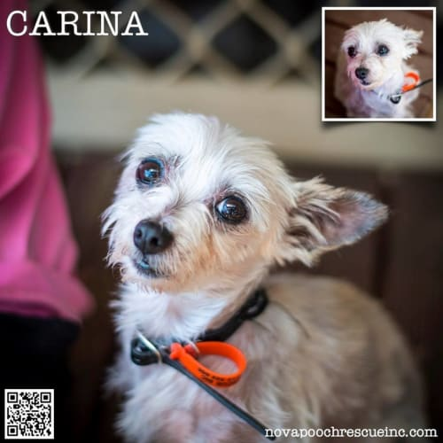 Carina (Bonded pair with Alex)