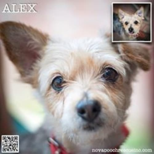 Alex (Bonded pair with Carina)