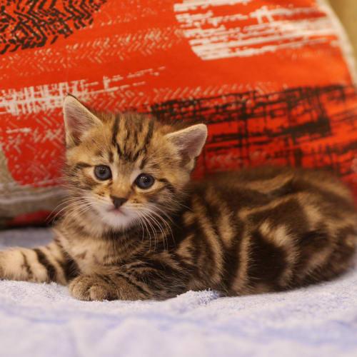 Adopted!! - Albert (Bertie)