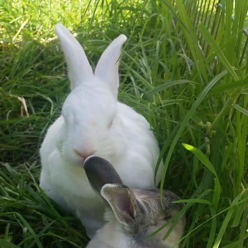 Rizzo & G - Domestic Rabbit