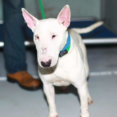 Bonnie (Looking for foster)