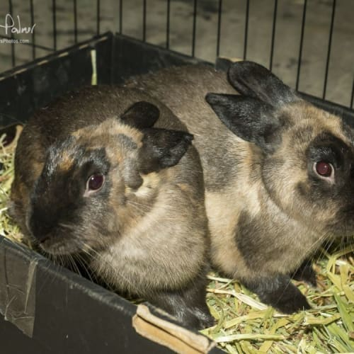 Preshes & Bruza **On Trial With Our New Family** -  Rabbit