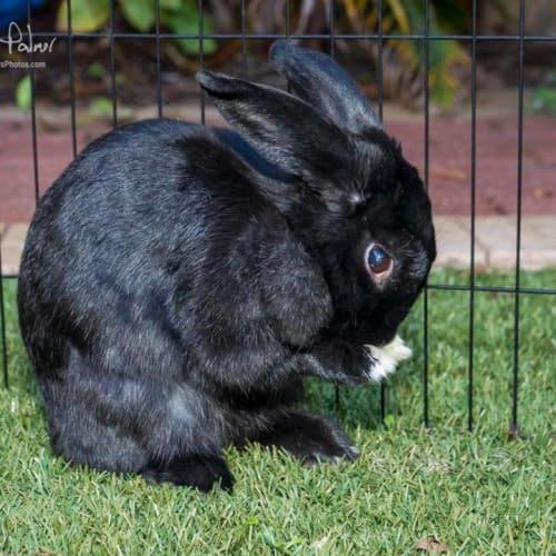 Tessa -  Rabbit