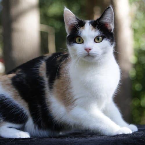 Pound Cats | Chloe