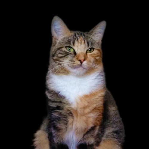 Pound Cats | Lady Jane