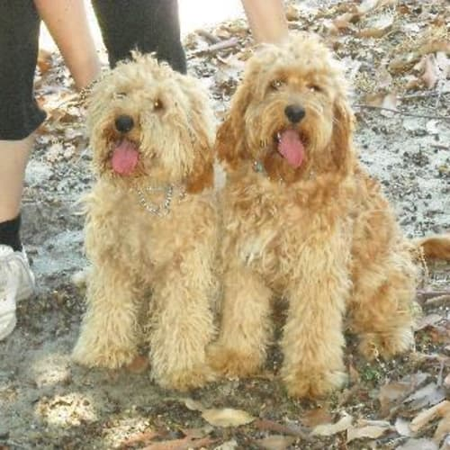 Quincey & Leo