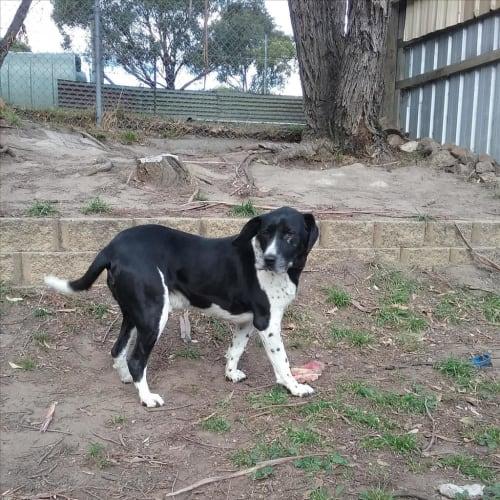 Buster - Hound Dog