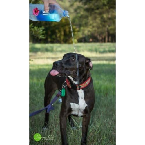 Mr Tubbs 🎄 - Staffy Dog