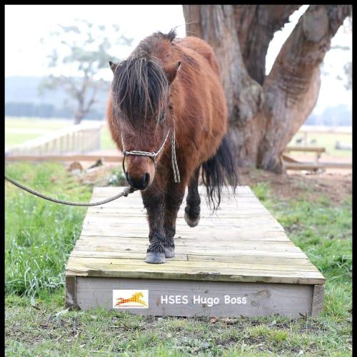 Hugo Boss  -  Horse