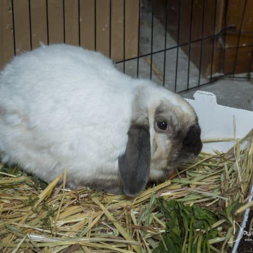 Swayze -  Rabbit