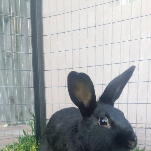 Moose -  Rabbit