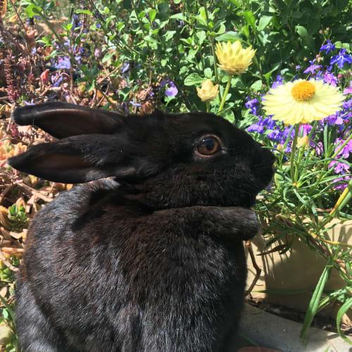 Regina George -  Rabbit
