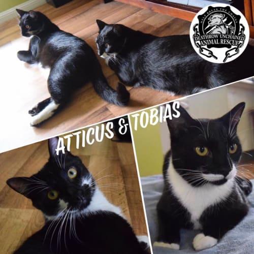 Atticus and Tobias