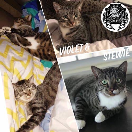 Stewie and Violet