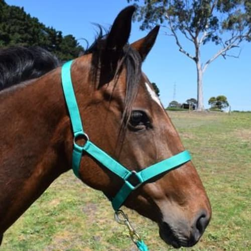 Filly 869831 -  Horse
