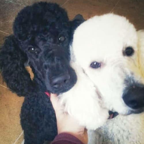 Ebony & Rosie