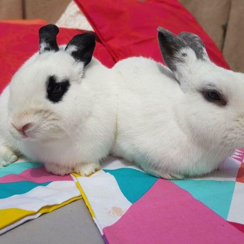 Pebbles & Winter  - Hotot Rabbit