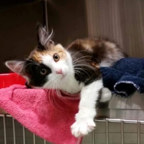 Zoe **2nd Chance Cat Rescue**
