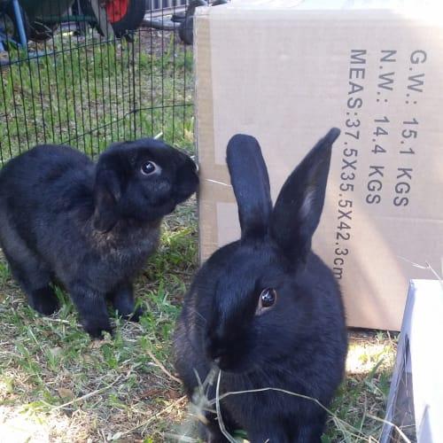 Spotu & Milo - Lop Eared Rabbit