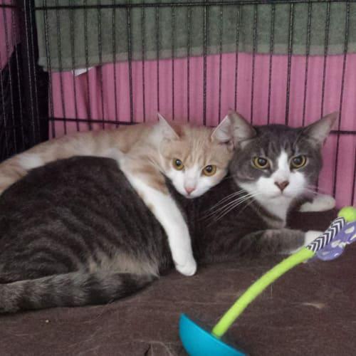 Finn and Meggsie
