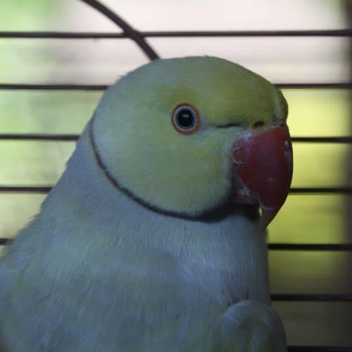 Felix -  Bird