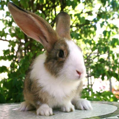 Jill -  Rabbit