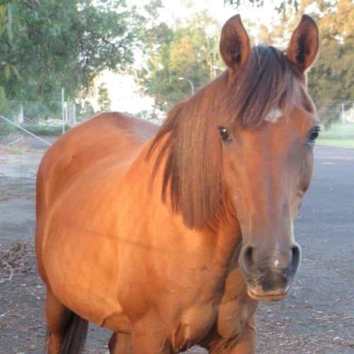 Clover -  Horse